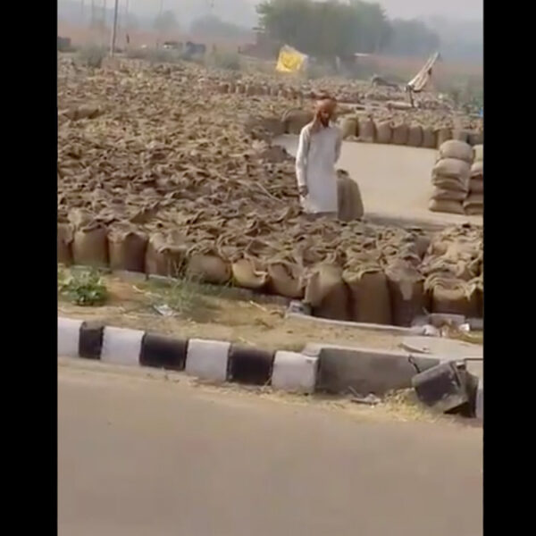 Viral video claiming Punjab farmers rot MSP grains for breweries is from 2018
