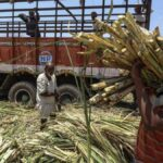 Why Modi govt panel is looking into this Gujarat model of payment for all sugarcane farmers