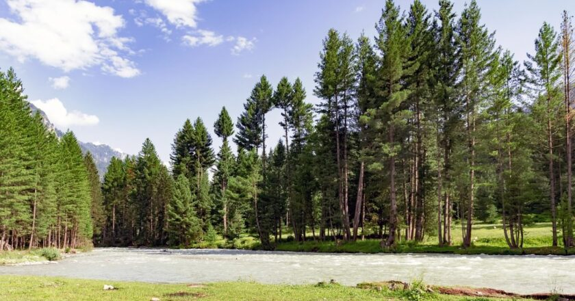World's tallest trees store more CO2 and are bigger than we imagined, finds laser technology